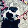 Kestävä heittolelu koiralle