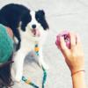 Aktivointilelu koiralle luonnonkumista