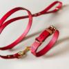 Punainen nahkapanta ja talutin koiralle