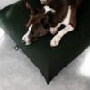 Vihreä peti koiralle