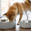 Koiran ruokinta ja ruokakupit