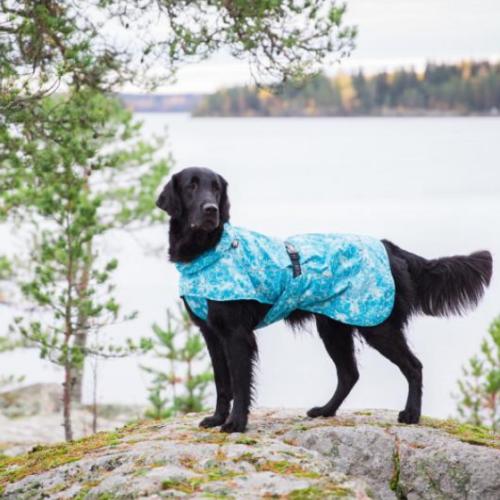 Edullinen sadetakki koiralle