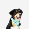 Koiran bandana