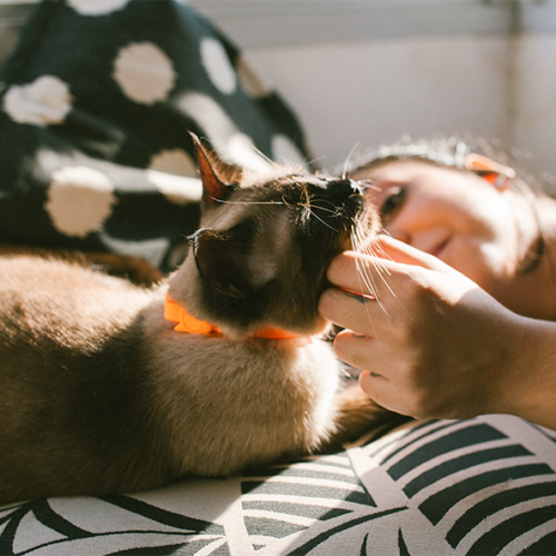 Kaulapanta kissalle