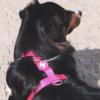 Pinkit valjaat koiralle