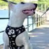 Ufo aiheiset valjaat koiralle