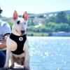 Tyylikkäät mustat valjaat koiralle