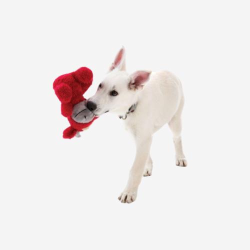 Koiran pehmolelu vingulla