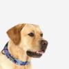 Leveä kaulapanta koiralle